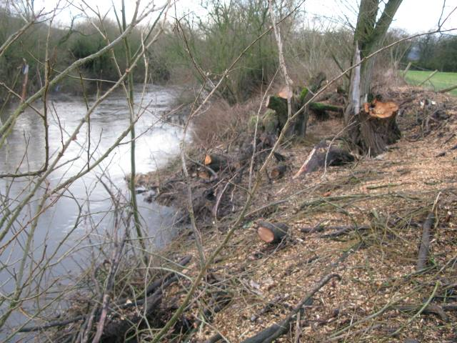 river aire tree felling.